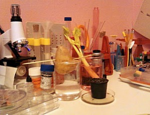 diy-science-experiment-table
