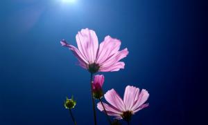 Photo credit: Flower by Solarisgirl/Flickr